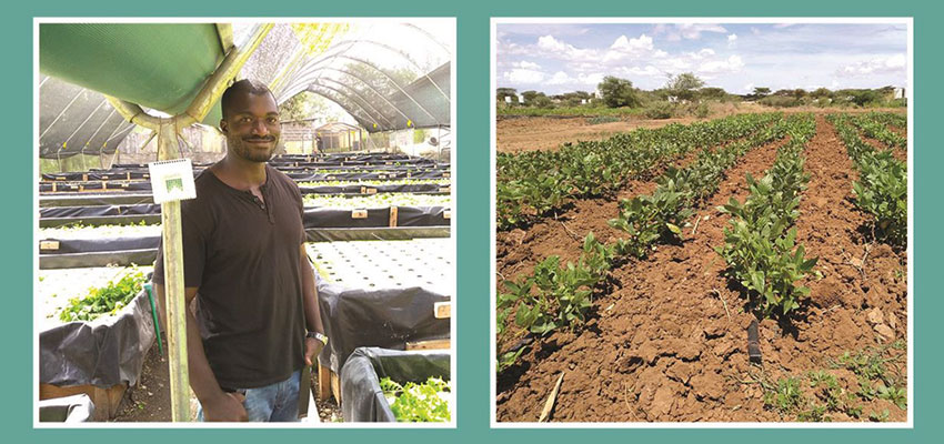 Left: Farmer Emmanuel Biketi, Horticulture Manager at Kikaboni Farm in Olooloitikosh, Kenya with an Upande temperature and relative humidity IoT device. Right: Drip irrigated vegetable cultivation at Napuu 1 Drip Irrigation Scheme in Lodwar, Kenya.