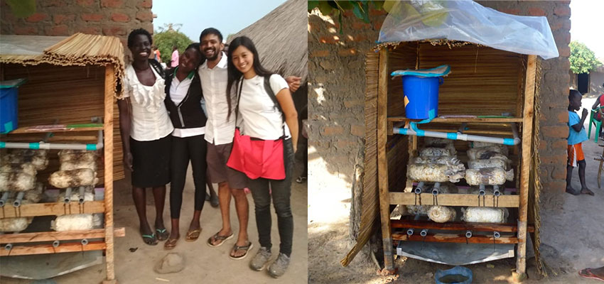 The mushroom house outside of Vivian's house, before and after – many bags are producing now! Photos: Adith A K and Richard Maliamungu