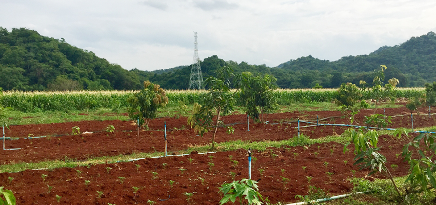 A Betagro Group farm with many different crops